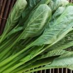 【旬の食材】小松菜(こまつな) 栄養素と美味しい小松菜の選び方【2月】