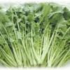 【旬の食材】(つぼみ菜) 栄養素と美味しい(つぼみ菜)の選び方【2月】