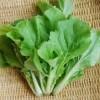 【旬の食材】(山東菜) 栄養素と美味しい(山東菜)の選び方【2月】