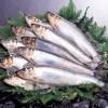【旬の食材】(にしん) 栄養素と美味しい(にしん)の選び方【3月】