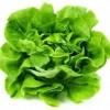 【旬の食材】(サラダ菜) 栄養素と美味しい(サラダ菜)の選び方【5月】
