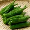 【旬の食材】(ししとう) 栄養素と美味しい(ししとう)の選び方【7月】