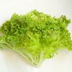 【旬の食材】(エンダイブ) 栄養素と美味しい(エンダイブ)の選び方【6月】
