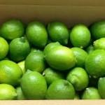 【旬の食材】(国産ライム)栄養素と美味しい(国産ライム)の選び方【11月】