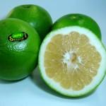【旬の食材】(スウィーティー)栄養素と美味しい(スウィーティ)の選び方【11月】