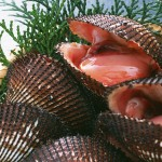 【旬の食材】(赤貝)栄養素と美味しい(赤貝)の選び方【11月】