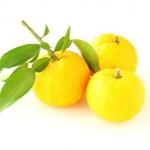 【旬の食材】(柚子)栄養素と美味しい(柚子)の選び方【11月】