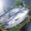 【旬の食材】(初カツオ) 栄養素と美味しい(初カツオ)の選び方【4月】
