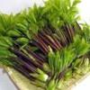 【旬の食材】(こしあぶら) 栄養素と美味しい(こしあぶら)の選び方【4月】