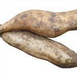 【旬の食材】(ヤーコン)栄養素と美味しい(ヤーコン)の選び方【11月】